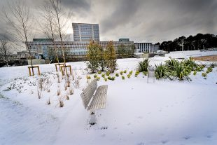 The DVLA building with the grounds covered in snow
